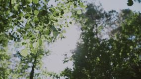 Fundo da natureza O brilho bonito de Sun com do sopro no verde da árvore do vento sae, movimento lento filme