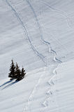 Fundo da neve com as trilhas do esqui e do snowboard Fotos de Stock Royalty Free