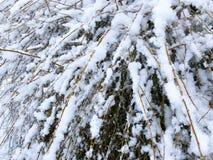Fundo da neve da paisagem do inverno com cenário do inverno duro das árvores com ramo coberto de neve da natureza das árvores Imagem de Stock