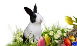 Fundo da Páscoa com ovos da páscoa e coelhinho da Páscoa Foto de Stock