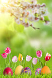 Fundo da Páscoa com ovos e ramo de florescência fotografia de stock
