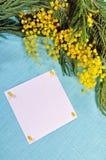 Fundo da Páscoa - o cartão branco com espaço livre para o texto na mimosa floresce Fotografia de Stock