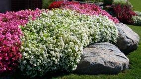 Fundo da paisagem com as camas de flor coloridas Foto de Stock Royalty Free