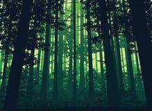 Fundo da paisagem com floresta profunda Imagens de Stock