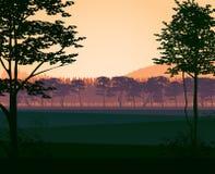 Fundo da paisagem com madeiras Fotos de Stock