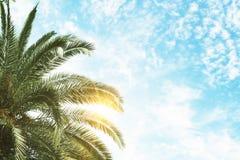 Fundo da palma verde e do céu azul Fotografia de Stock