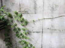 Fundo da parede Foto de Stock