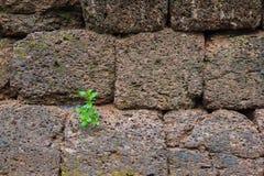 Fundo da parede de pedra Fotos de Stock