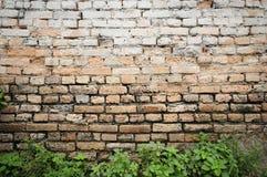 Fundo da parede de tijolo com plantas Fotos de Stock