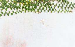 Fundo da parede do cimento com planta do rastejamento foto de stock