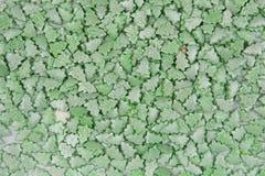Fundo da pele-árvore pequena imagem de stock royalty free