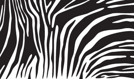 Fundo da pele da zebra Fotografia de Stock Royalty Free