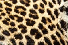 Fundo da pele do leopardo Imagens de Stock