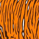 Fundo da pele do tigre. Foto de Stock