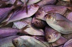 Fundo da pilha dos peixes frescos Imagens de Stock