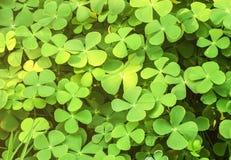 Fundo da planta local da vegetação rasteira Imagens de Stock Royalty Free