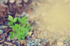 Fundo da planta Plnat bonito com filtros de cor Foto de Stock