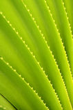 Fundo da planta tropical Foto de Stock