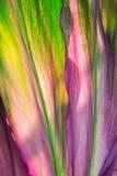Fundo da planta verde e roxa do fruticosa do Cordyline imagens de stock