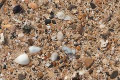 Fundo da praia com areia, escudos do mar e estrela do mar foto de stock royalty free