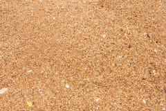Fundo da praia de Sandy Imagem de Stock