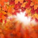 Fundo da queda com as folhas de bordo vermelhas do outono e luz abstrata do sol imagens de stock royalty free