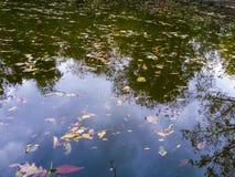 Fundo da reflexão da água Imagens de Stock