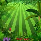 Fundo da selva da iluminação ilustração royalty free