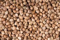 Fundo da semente de cânhamo Fotografia de Stock Royalty Free