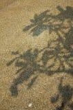 Fundo da sombra da árvore Foto de Stock Royalty Free
