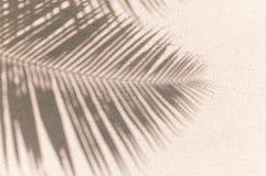 Fundo da sombra das folhas de palmeira Fotografia de Stock Royalty Free
