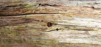 Fundo da textura da casca de árvore Foto de Stock Royalty Free