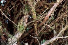 Fundo da textura da casca de árvore - Imagem uma árvore de Tailândia foto de stock