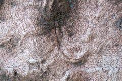 Fundo da textura da casca de árvore naughty fotografia de stock royalty free
