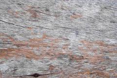 Fundo da textura da casca de árvore naughty imagem de stock