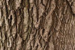 Fundo da textura da casca de árvore nave fotografia de stock royalty free
