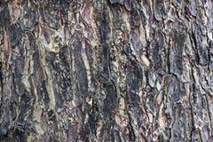 Fundo da textura da árvore Fotografia de Stock Royalty Free