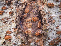 Fundo da textura da árvore de casca Foto de Stock Royalty Free