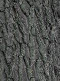 Fundo da textura da casca de árvore Imagem de Stock