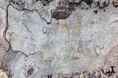 Fundo da textura da casca de árvore Foto de Stock