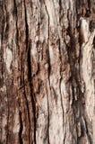 Fundo da textura da casca de árvore Fotografia de Stock Royalty Free