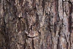Fundo da textura da casca de árvore Imagem de Stock Royalty Free