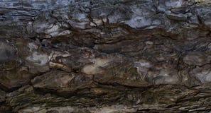Fundo da textura da casca de pinheiro Fotos de Stock Royalty Free