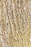 Fundo da textura da caverna da árvore Foto de Stock