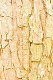 Fundo da textura da caverna da árvore Imagens de Stock Royalty Free