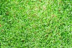 Fundo da textura da grama do Pequim Foto de Stock