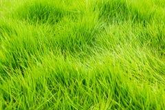 Fundo da textura da grama verde Imagens de Stock Royalty Free