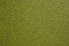 Fundo da textura da lentilha-d'água Fotografia de Stock Royalty Free