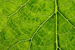 Fundo da textura da planta do close up Imagem de Stock Royalty Free
