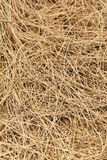 Fundo da textura de Weed Foto de Stock